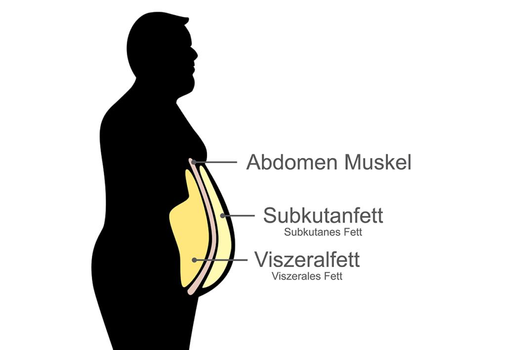Was Du über Deinen Bauch wissen solltest - solar22|Shutterstock.com